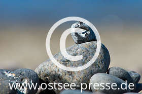 Ostsee Pressebild: Hühnergötter an der Ostsee