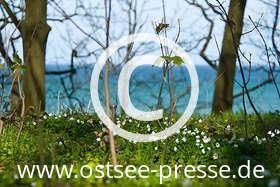 Ostsee Pressebild: Frühling an der Ostsee