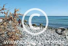 Ostsee Pressebild: Sanddorn am Naturstrand