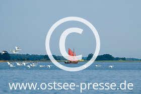Ostsee Pressebild: Idyllische Natur an der Ostsee