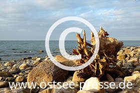 Ostsee Pressebild: Strandgut